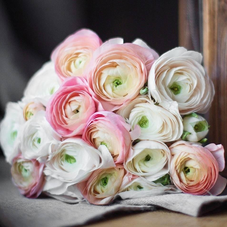 Цветы букеты ранункулюсы цена, красных роз фото